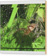 Grass Spider Wood Print
