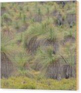 Grass Tree Wood Print