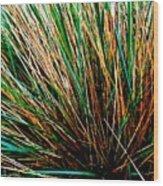 Grass Tussock Wood Print