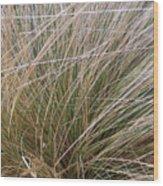 Grasses 5 Wood Print