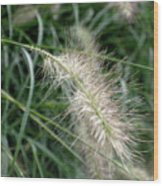Grasses 6 Wood Print