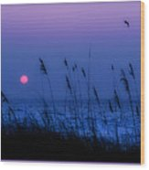 Grasses Frame The Setting Sun In Florida Wood Print