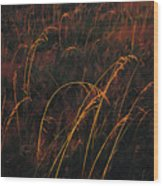 Grasses Glow Golden In Evenings Light Wood Print by Raymond Gehman