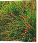 Grasses In The Verticle Wood Print