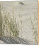 Grasses On The Beach Wood Print