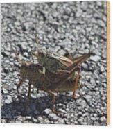 Grasshoper Love Wood Print