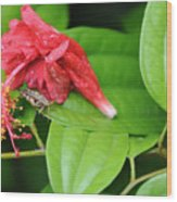 Grasshopper And Hibiscus Wood Print