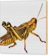 Grasshopper I Wood Print