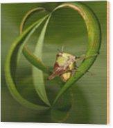 Grasshopper Twist Wood Print