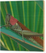 Grasshopper On Palm Leaf Wood Print