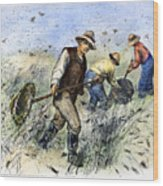 Grasshopper Plague, 1888 Wood Print