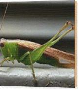 Grasshopper Posing Wood Print