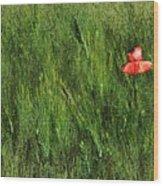 Grassland And Red Poppy Flower 2 Wood Print