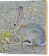 Grassland Youngster Wood Print