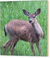 Grassy Doe Wood Print