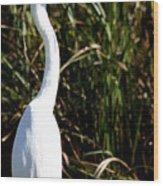 Grassy Egret Wood Print