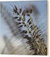 Grassy Wood Print