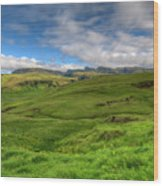 Grassy Meadow South Iceland Wood Print