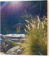 Grassy Sun Rays Wood Print