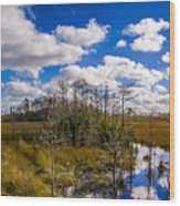 Grassy Waters 3 Wood Print