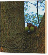 Grateful Tree Squirrel Wood Print