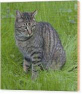 Gray Cat In Vivid Green Grass Wood Print