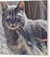 Gray Cat In Woods Wood Print