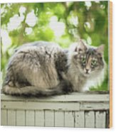 Gray Cat Sitting On A Balcony Wood Print