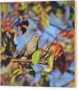 Gray Catbird Framed By Fall Wood Print