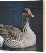 Gray Duck Wood Print