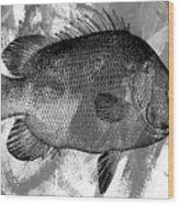 Gray Fish Wood Print