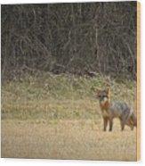 Gray Fox In Lower Pasture Wood Print