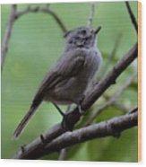 Gray Grey Bird 052814a Wood Print
