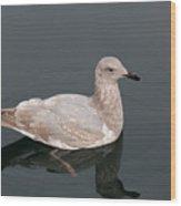 Gray Gull Reflection Wood Print