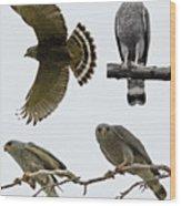 Gray Hawk Collage Wood Print