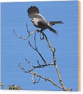 Gray Hawk Retreat Wood Print
