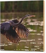 Gray Heron Wood Print