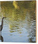 Gray Heron  Wood Print