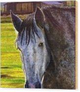 Gray Horse Wood Print