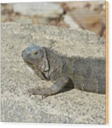 Gray Iguana Sunning And Resting On A Large Rock Wood Print