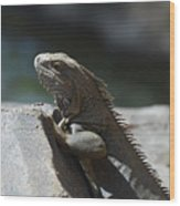 Gray Iguana With Spines Along His Back On A Rock Wood Print