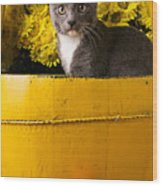 Gray Kitten In Yellow Bucket Wood Print