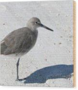 Gray Sandpiper On White Beach Wood Print