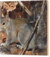 Gray Squirrel Wood Print