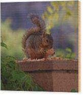 Munching Squirrel Wood Print