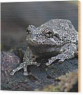 Gray Treefrog On A Log Wood Print