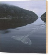 Gray Whale Clayoquot Sound Wood Print