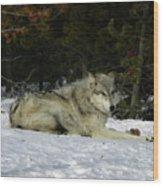 Gray Wolf 5 Wood Print
