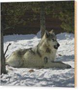 Gray Wolf 6 Wood Print