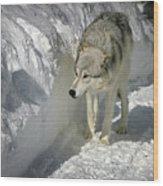 Gray Wolf 7 Wood Print